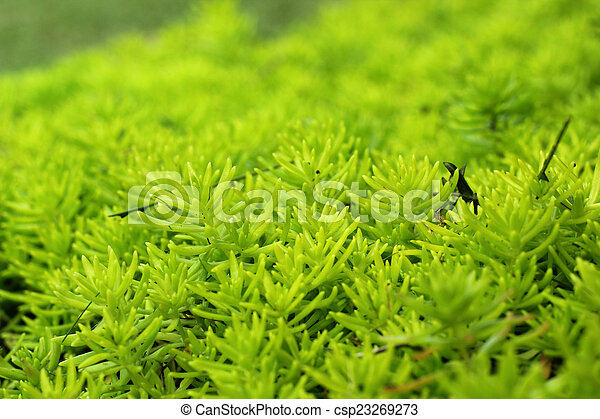 Fern green in the nature - csp23269273