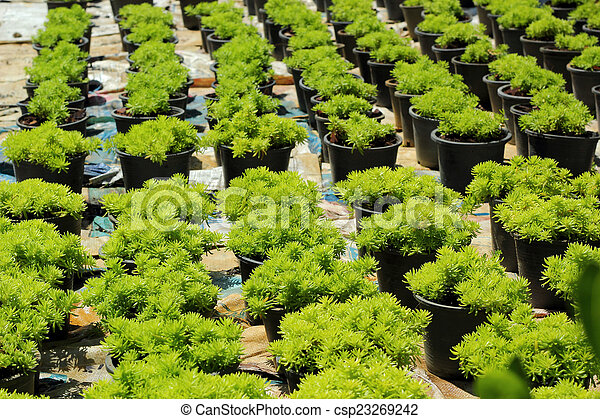 Fern green in the nature - csp23269242