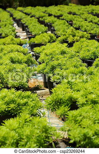 Fern green in the nature - csp23269244