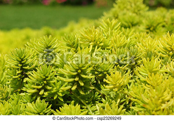 Fern green in the nature - csp23269249