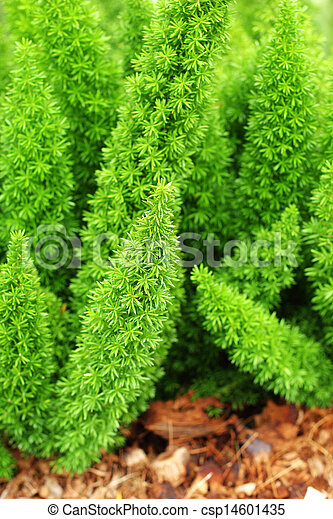 Fern - green leaves. - csp14601435