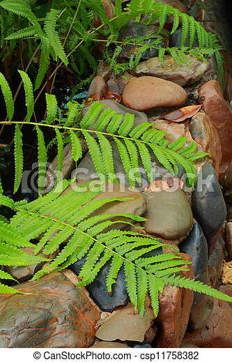 Fern on a rock - csp11758382