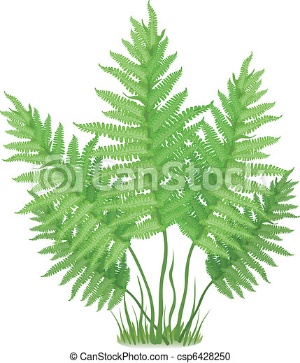 plant of fern family on white background vector vector clipart rh canstockphoto com fern clipart png silver fern clipart