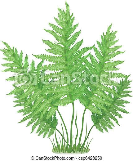 fern plant of fern family on white background vector illustration rh canstockphoto com fern clip art free fern clip art black