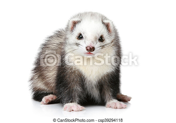 Ferret on a white background - csp39294118