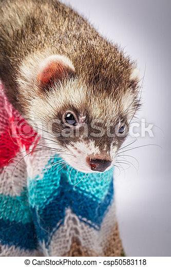 Ferret sitting in a basket - csp50583118