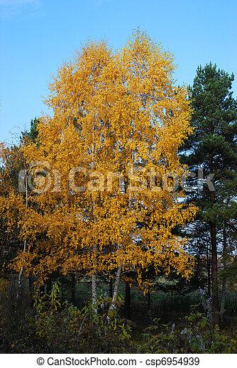 feuillage bouleau deux jaune jeune automne fond ciel arbres contre. Black Bedroom Furniture Sets. Home Design Ideas