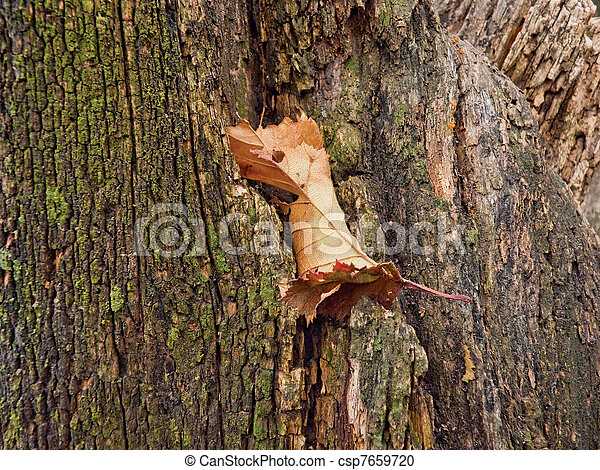feuille arbre, thrall - csp7659720