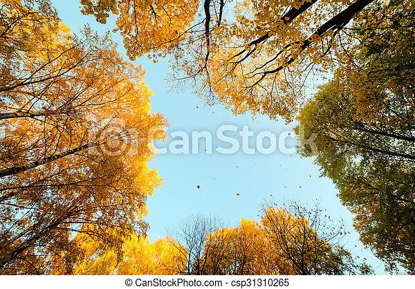 feuille automne, automne - csp31310265