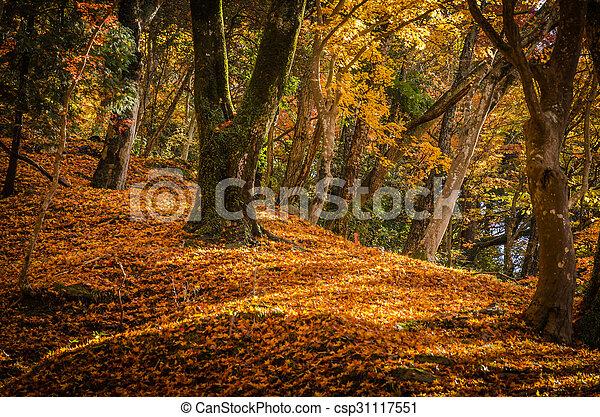 feuille automne, colline - csp31117551