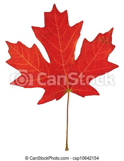 feuille, automne - csp10642154