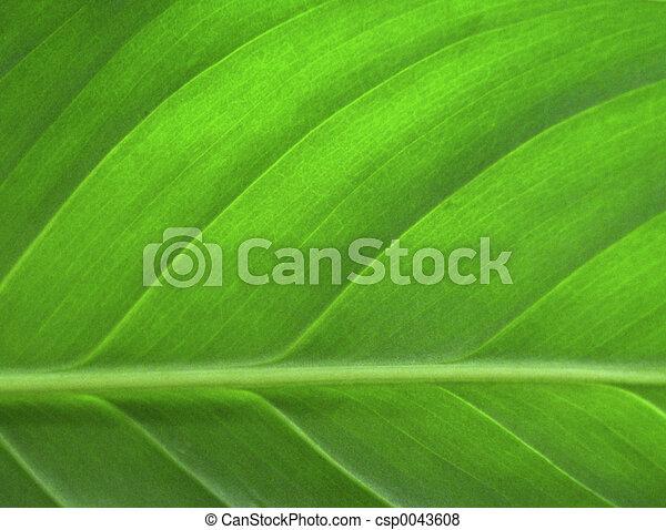 feuille, closeup, vert - csp0043608