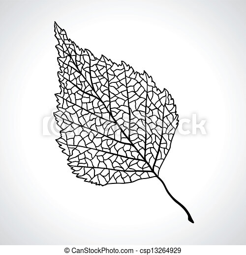 feuille, isolated., macro, arbre, noir, bouleau - csp13264929