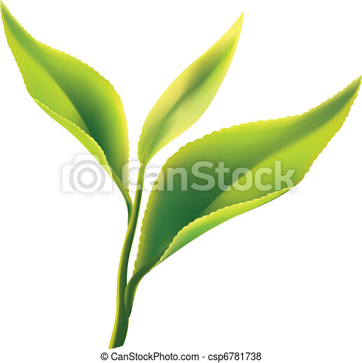 feuille, thé, arrière-plan vert, frais, blanc - csp6781738