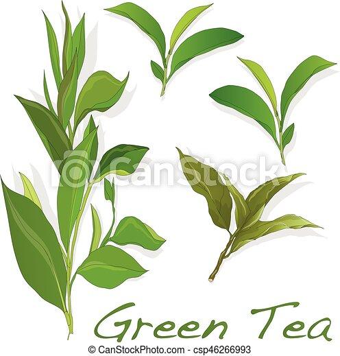 feuille, thé, isolé, arrière-plan vert, blanc - csp46266993
