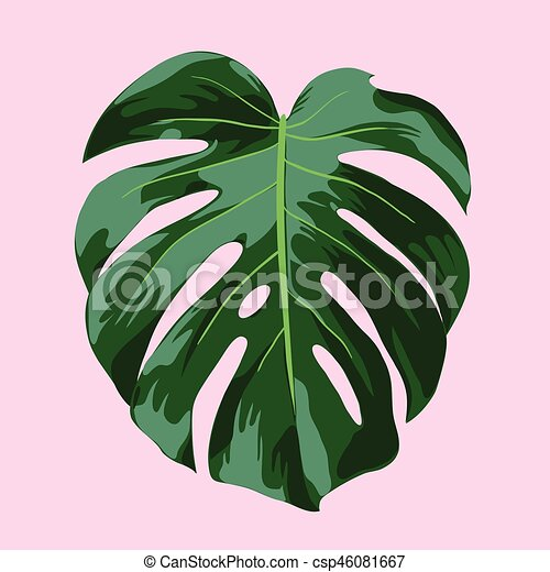 feuille tropicale illustration monstera rose feuille clip art vectoriel rechercher des. Black Bedroom Furniture Sets. Home Design Ideas