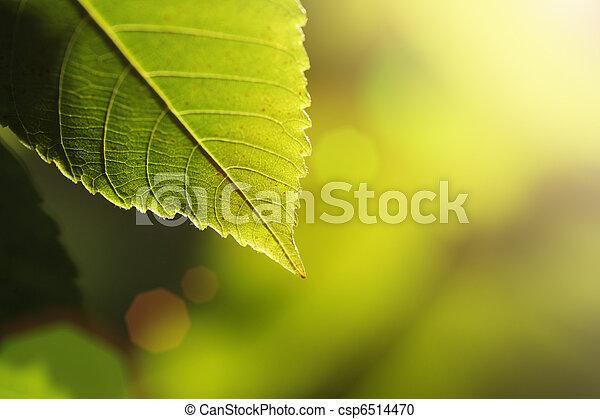 feuille verte - csp6514470