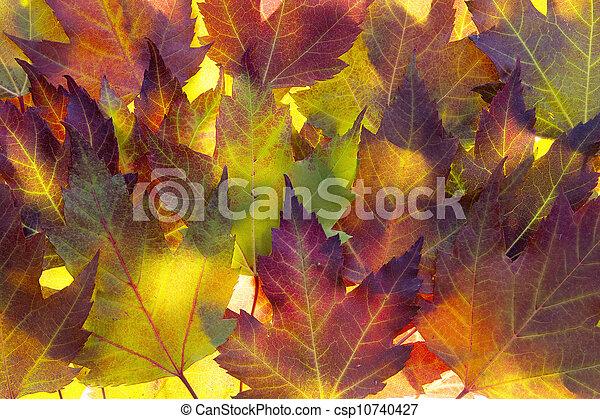 feuilles, érable, fond, automne - csp10740427