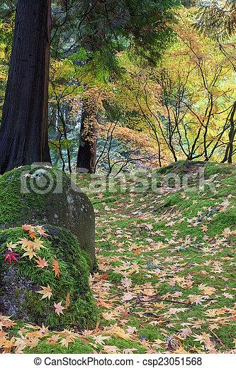 feuilles, arbre, érable japonais, rochers - csp23051568