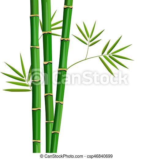 Feuilles Arbre Isolé Frais Blanc Bambou