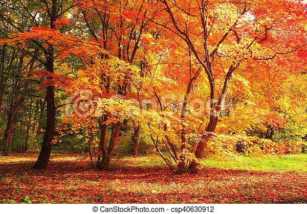 foto de Feuilles, arbre, jaune rouge. Ensoleillé, feuilles, arbre, jaune ...