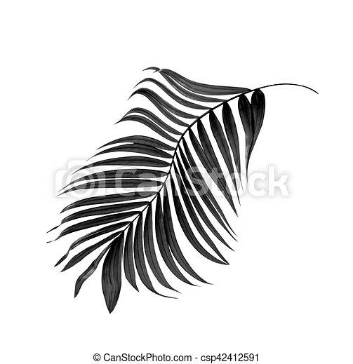 Feuilles Arbre Paume Fond Noir Blanc