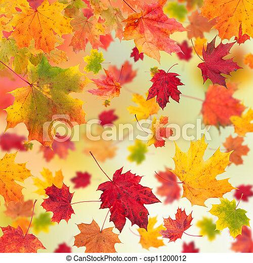 feuilles automne, érable, fond - csp11200012