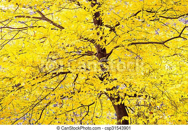 foto de Feuilles automne, arbre, feuillage, jaune. Beau, coloré, feuilles ...