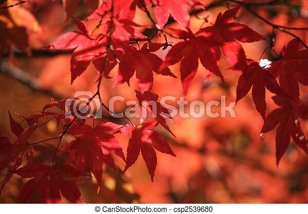feuilles, automne - csp2539680