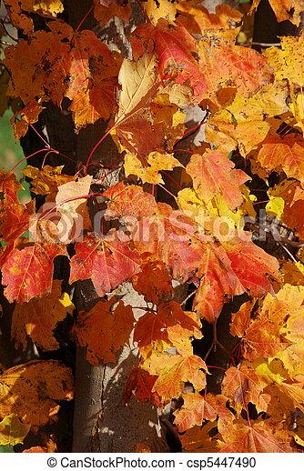 feuilles, automne - csp5447490
