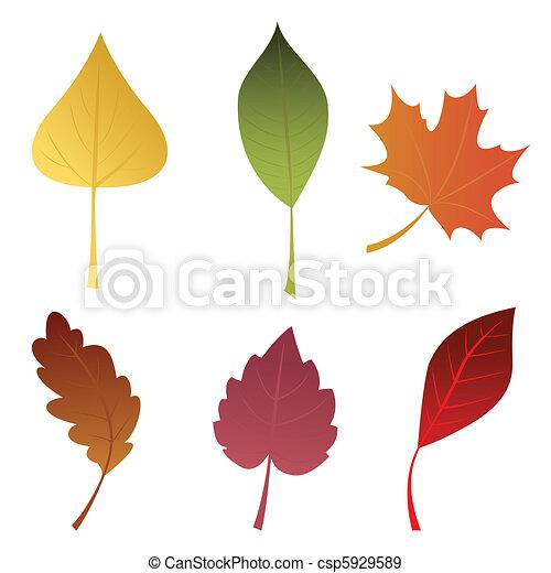 feuilles automne - csp5929589