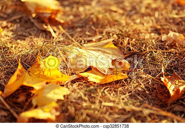 feuilles automne, herbe - csp32851738