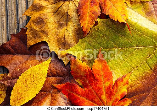 feuilles, automne - csp17404751