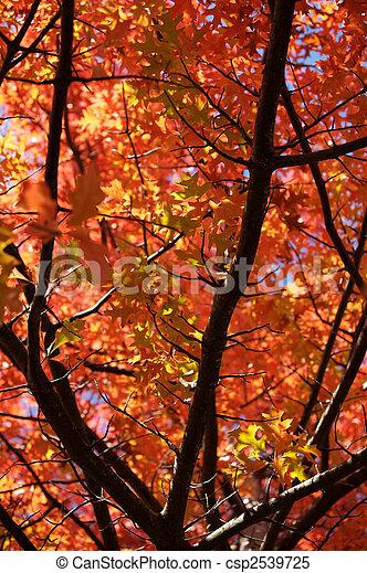 feuilles, automne - csp2539725