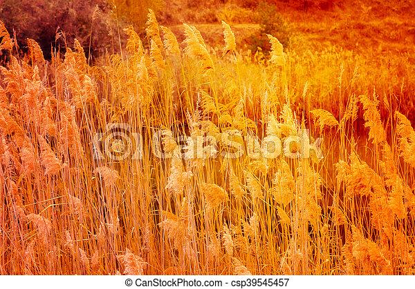 feuilles automne - csp39545457