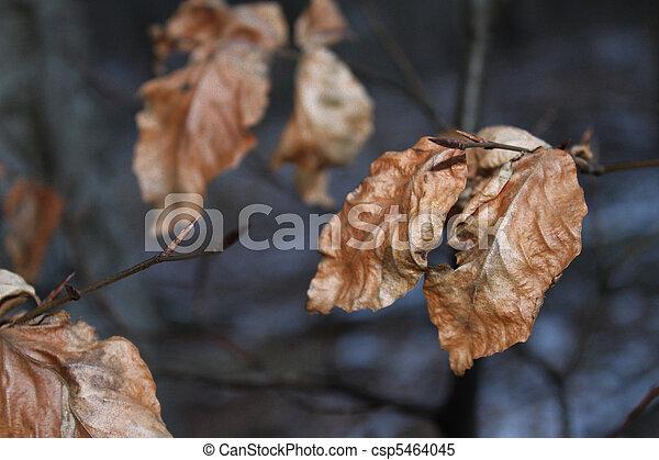 feuilles, automne - csp5464045