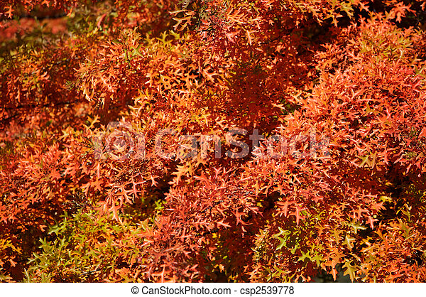 feuilles, automne - csp2539778