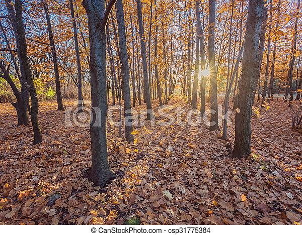 feuilles automne, park., automnal, arbres - csp31775384