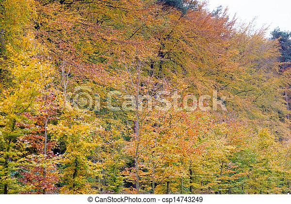 feuilles automne, park., coloré - csp14743249