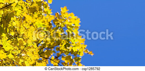 feuilles automne - csp1285792