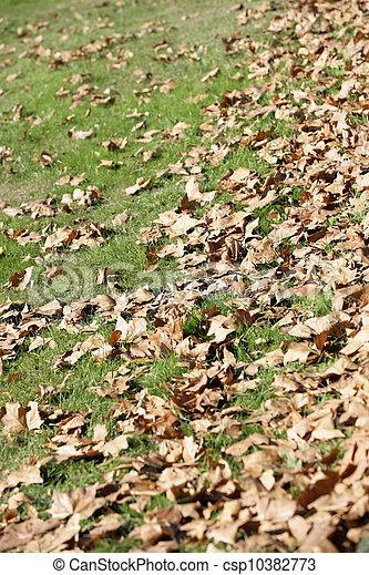 feuilles, baissé - csp10382773
