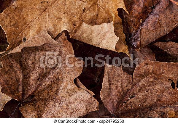 feuilles, baissé - csp24795250