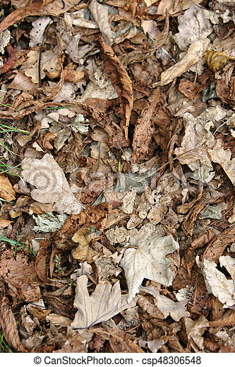 feuilles, baissé - csp48306548