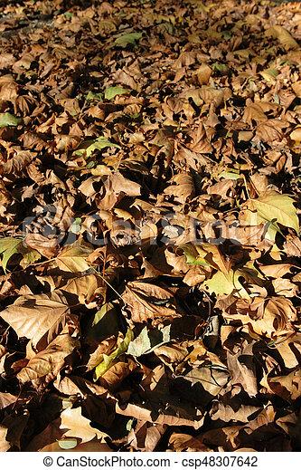 feuilles, baissé - csp48307642