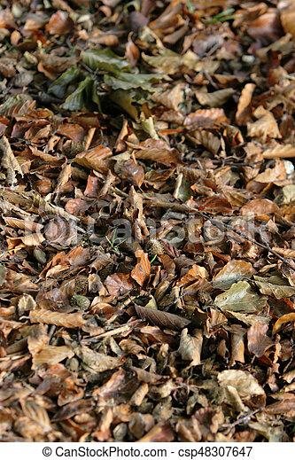 feuilles, baissé - csp48307647