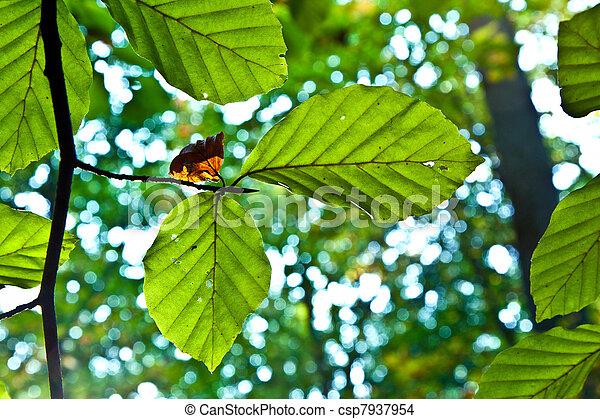 feuilles, chêne, harmonie - csp7937954