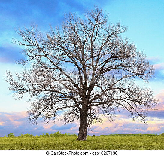 Feuilles ch ne sans arbre solitaire feuilles arbre - Arbres sans feuilles ...