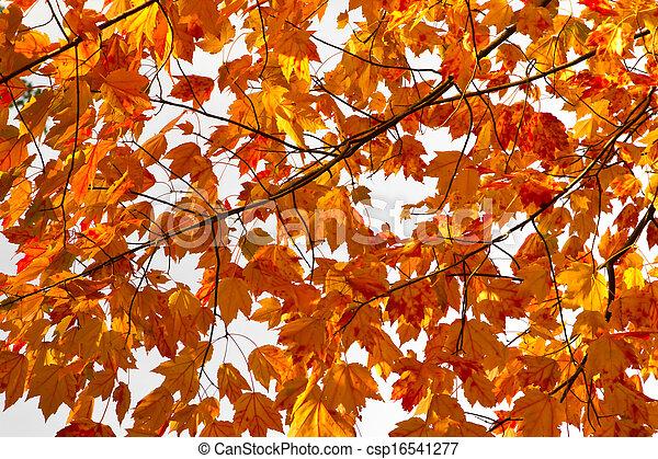 feuilles, coloré, fond, texture, automne - csp16541277