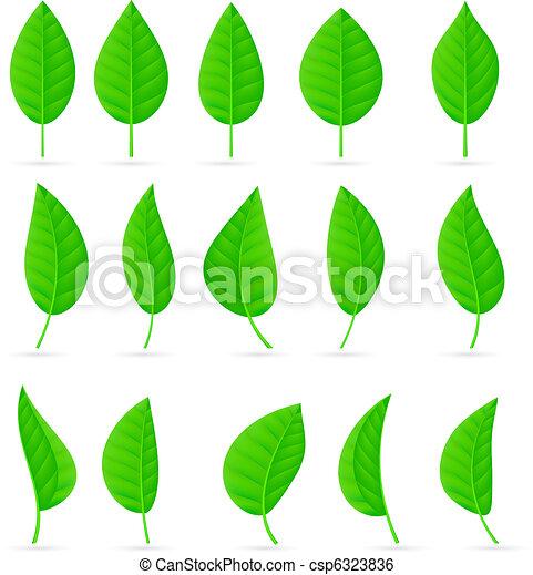feuilles, divers, formes, vert, types - csp6323836
