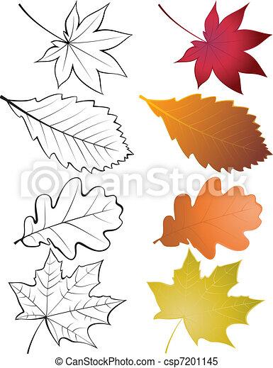feuilles, ensemble - csp7201145